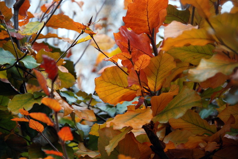 L'automne raconte la fin de l'été ...
