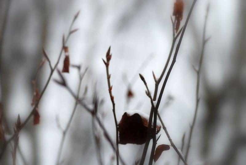 Poésie de l'hiver