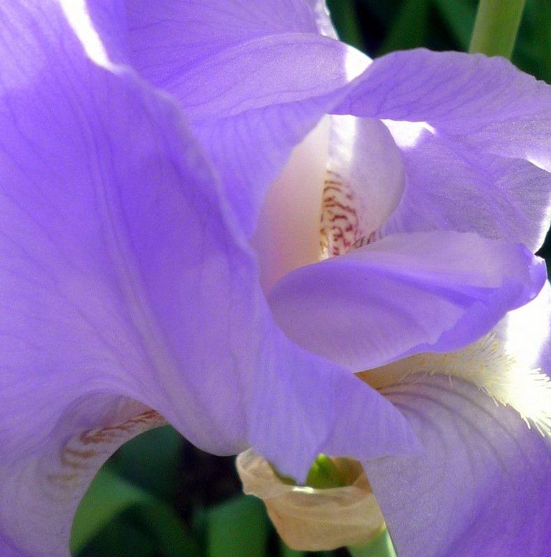 Au coeur de la lumière : l'Iris