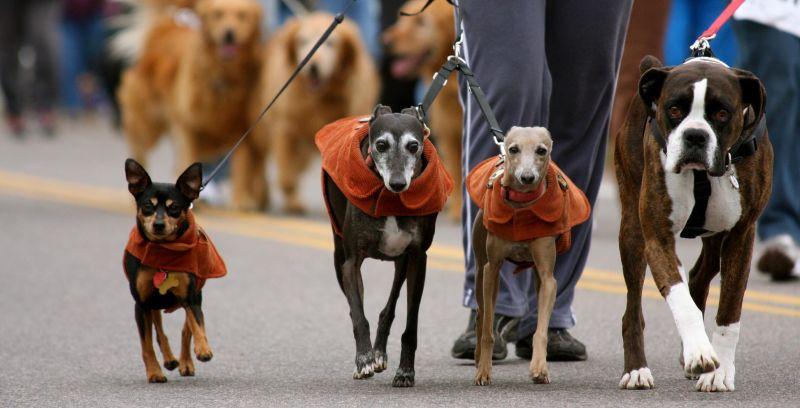 furry scurry denver dogs