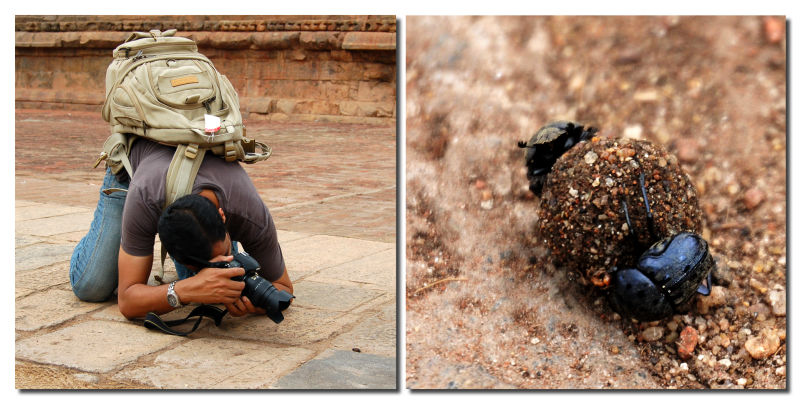 Dung Beetle & Me