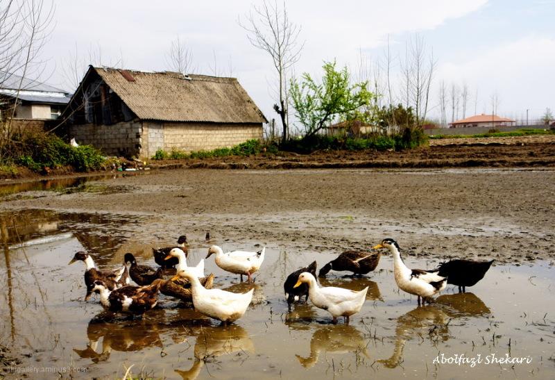 Iran.Gilan.Rasht.Hendkhaleh Village