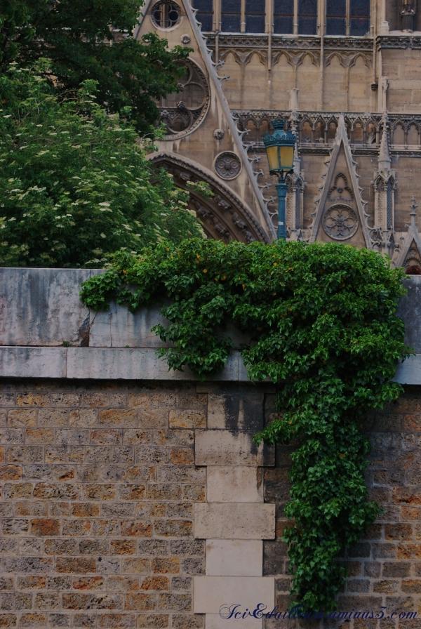 Cathédrale Paris Végétation