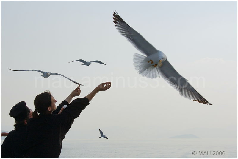 Curas y gaviotas - Priests and seagulls