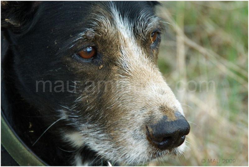 Puli (Mi perro - My dog)