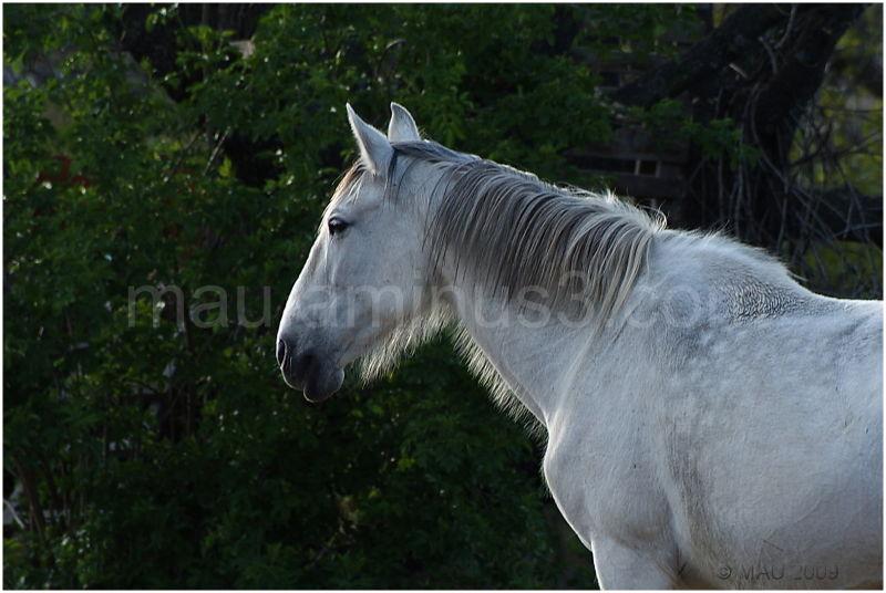 Un caballo - A horse