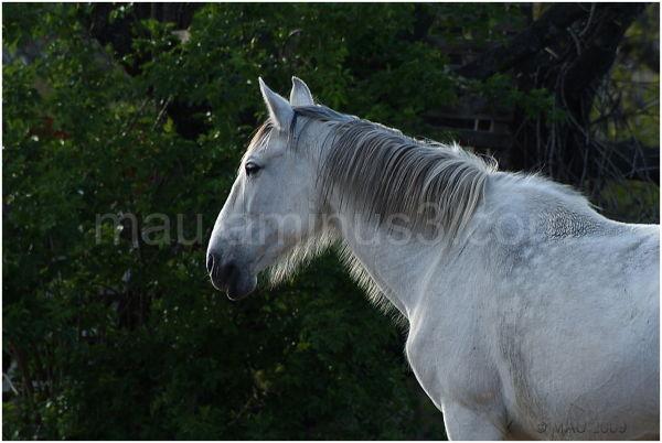 Un caballo   A horse