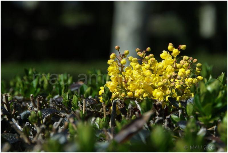Llegó la Primavera - Spring is Here