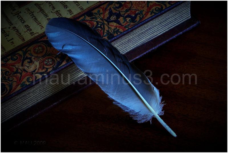 Pluma - Feather