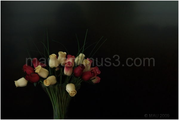 Rosas de madera   Wooden roses