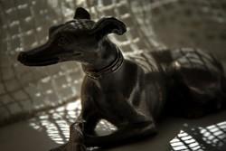 Perro de bronce - Bronze dog