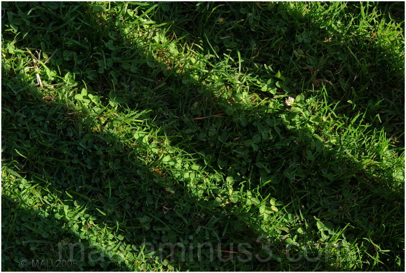 Undulating lawn