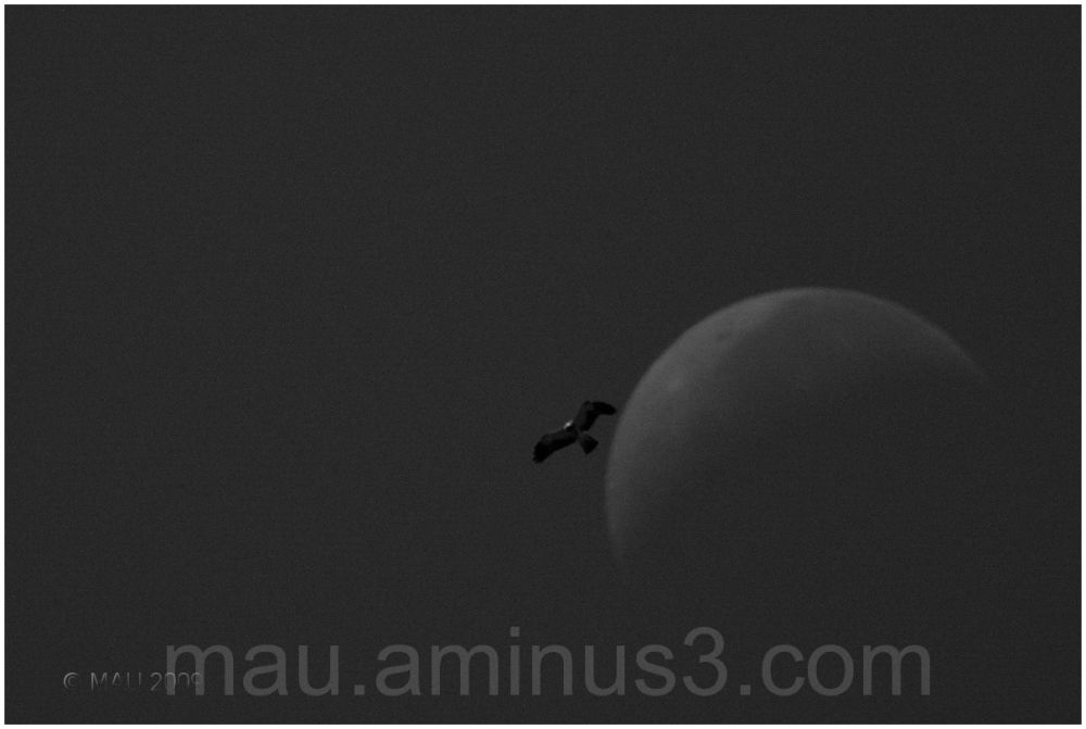 Lunar big bird