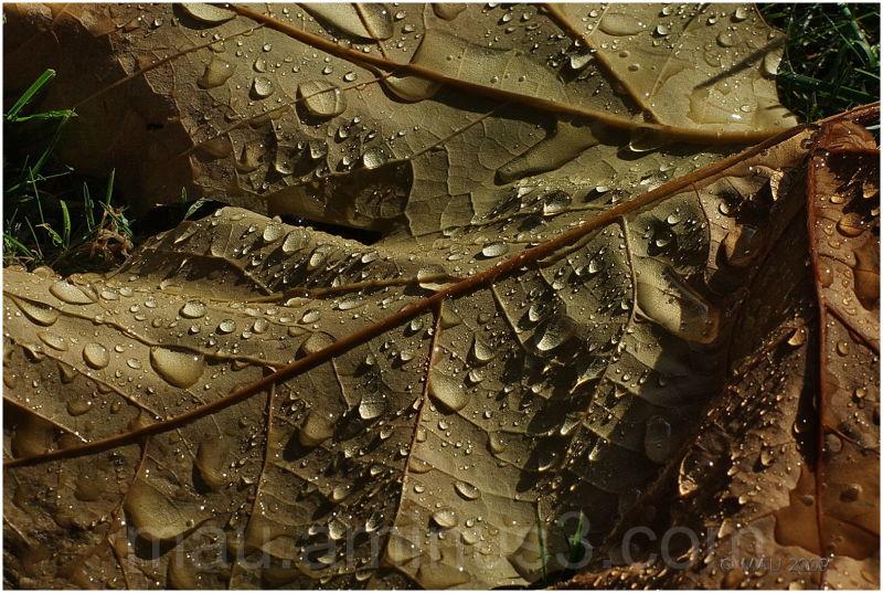 First raindrops this Autumn