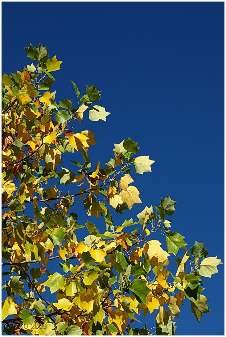 Another cloudless Autumn day