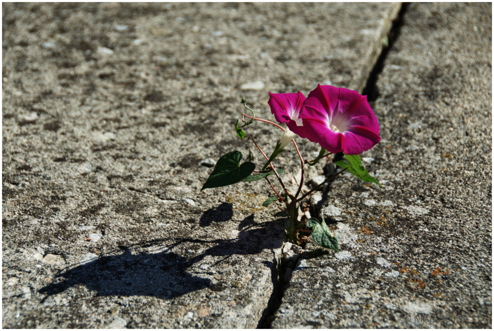 Sobrevivir en un entorno hostil hostile
