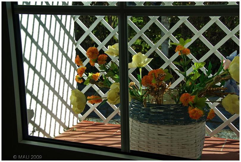 Flowers from inside the window