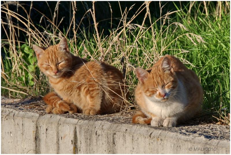 Gatos tomando el sol