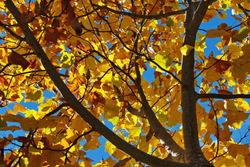Luz y colores de otoño