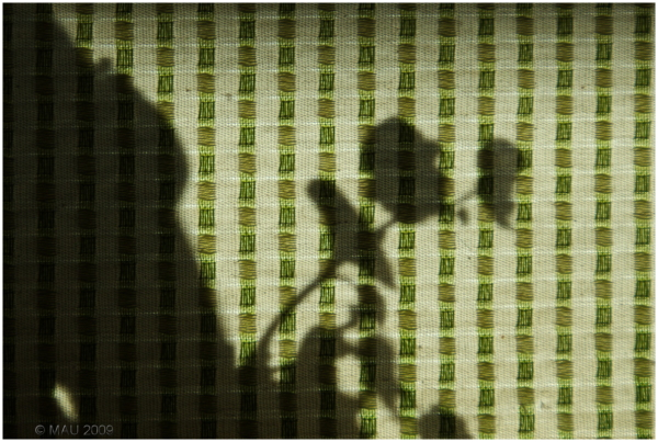 Sombras en una cortina