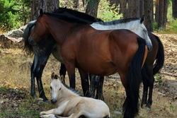 Familia de caballos