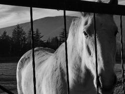 Mi amigo el caballo y la verja