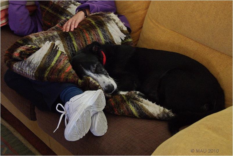"""Compartiendo la siesta / Sharing the """"siesta"""""""