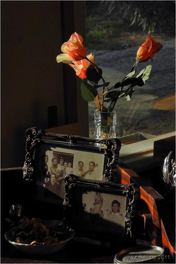 Fotos y rosas
