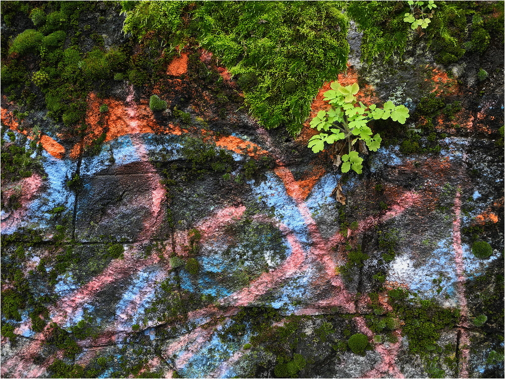 Grafitti con musgo