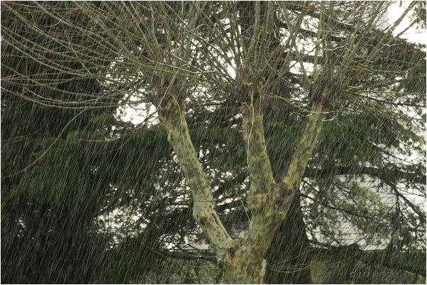 Lluvia durante una tormenta