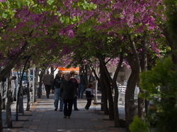 Paseo florido en primavera