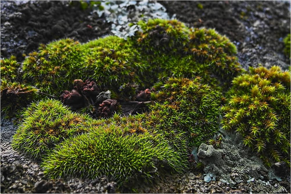 Musgo sobre una roca