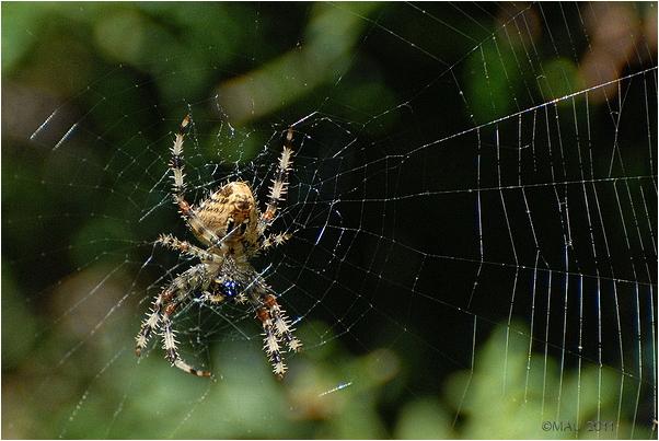 Una araña en mi jardín