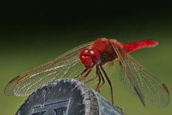 Mi única libélula