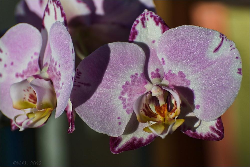 Detalle de una orquídea