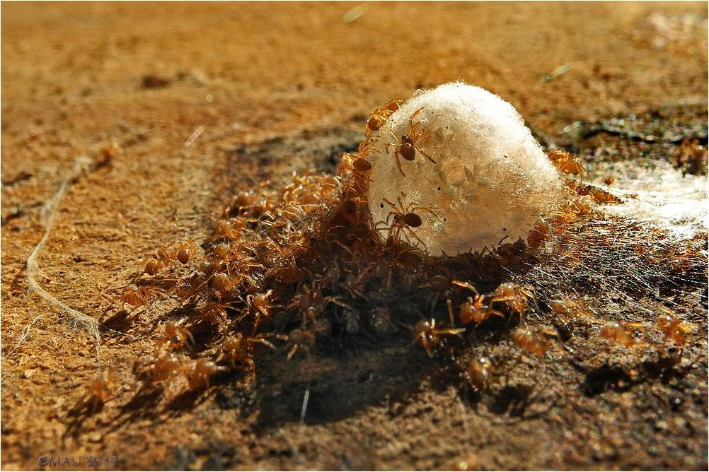 Un nido de arañas