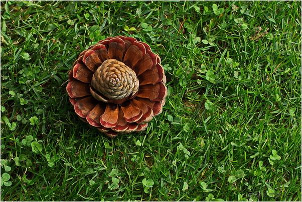 La piña que quería ser flor