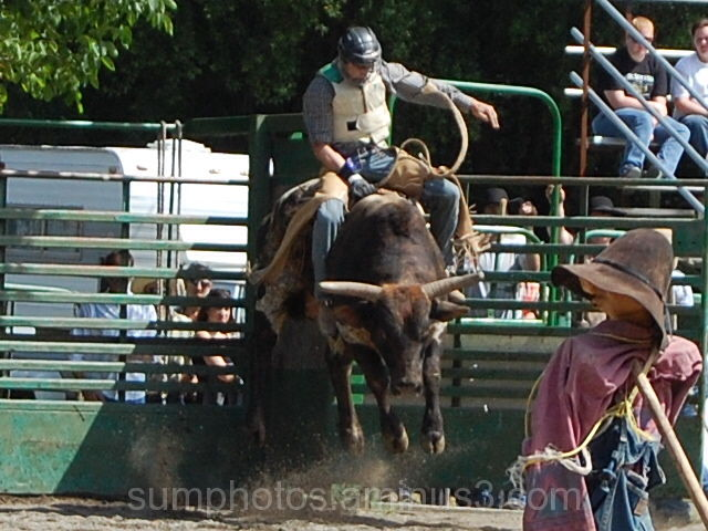 Myrtle Creek Rodeo #3