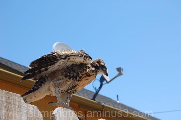 Baby bird # 4