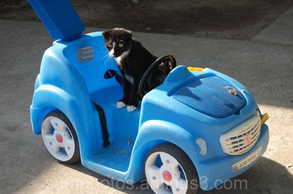 Gato's new car