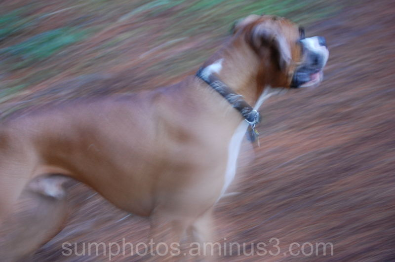 Roy in a blurr