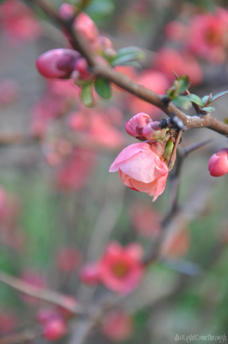 pink blossom day