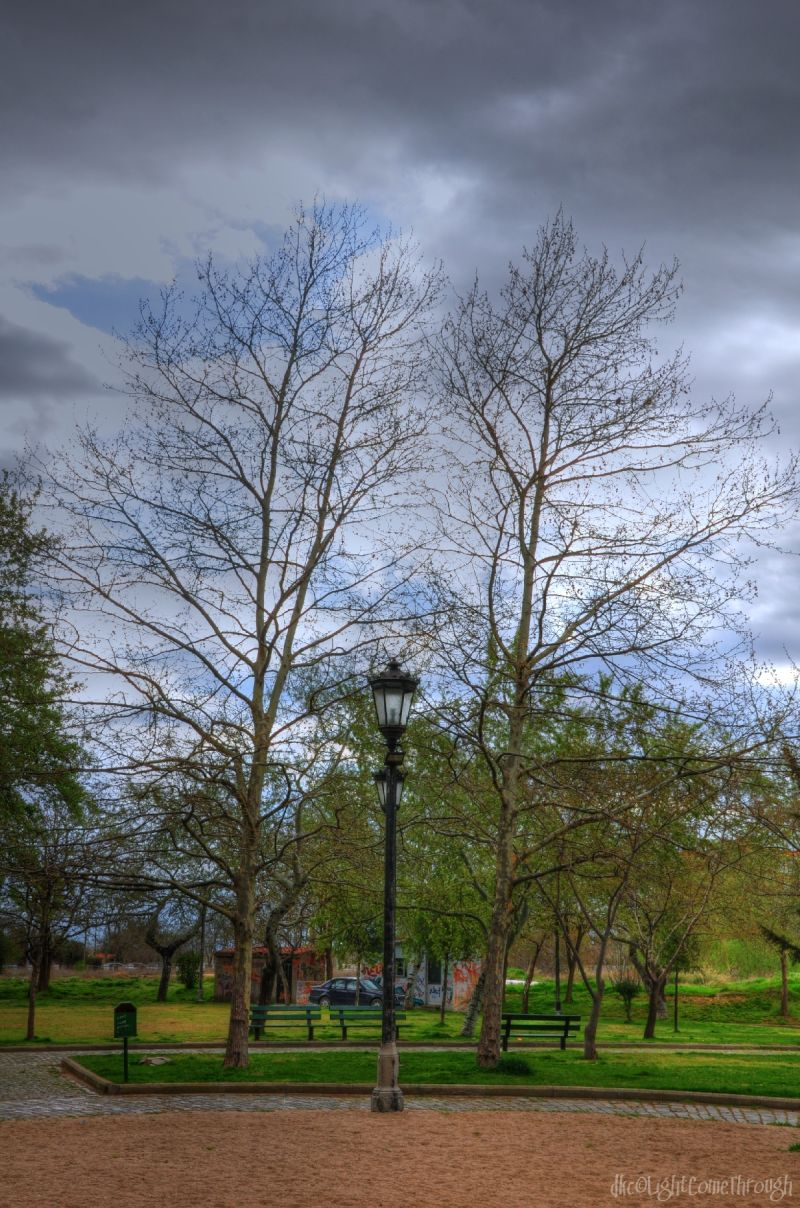 Twin trees behind twin lamps