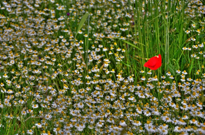 surrounding by daisys