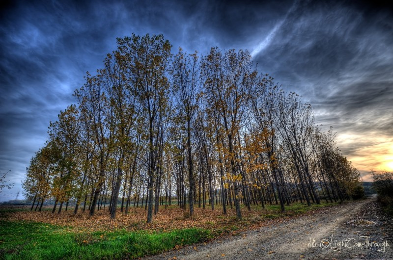 HDR Elm forest during autumn
