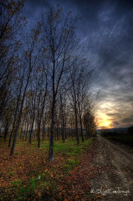 elm forest taken in portrait mode