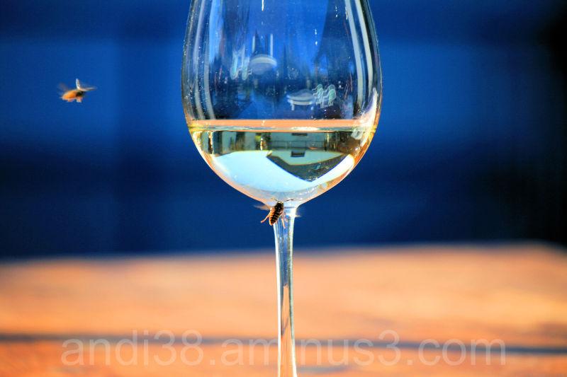 Wasp and White Wine