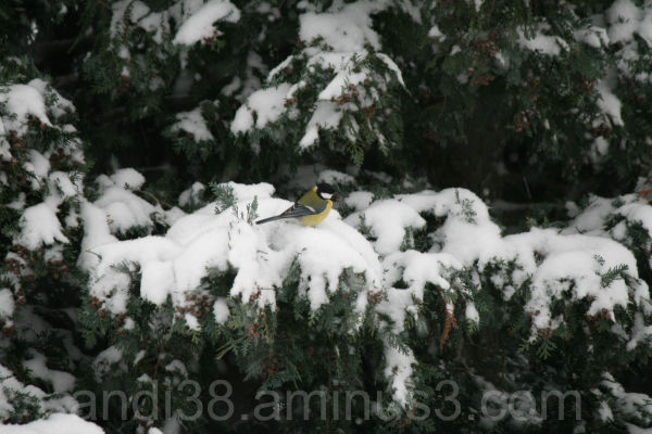 Little Bird on snowy Tree