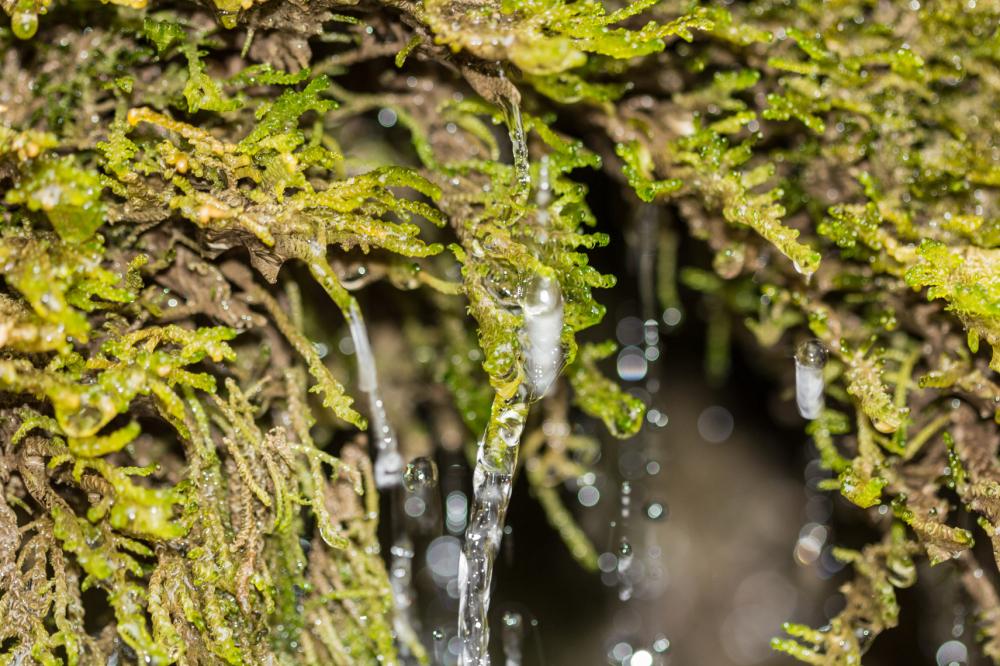 Wasserfall Dreimühlen #6