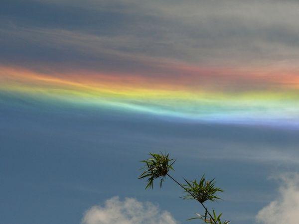 The Humboldt Rainbows